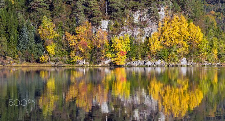 Autumn coloured trees reflecting of a calm lake in Norway.