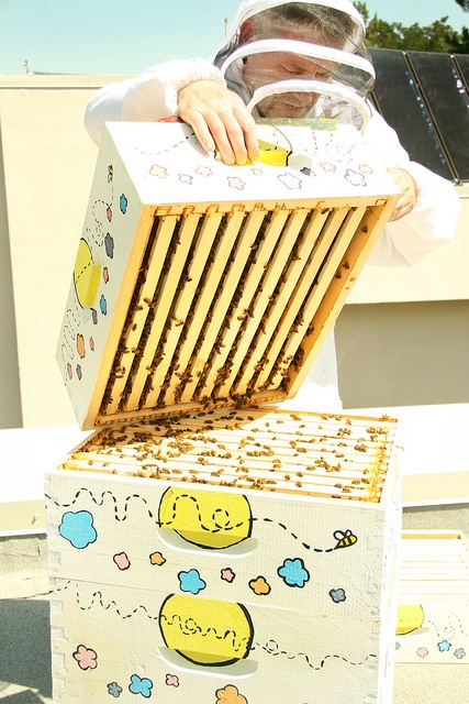 Honeybees atop Food Training #5 by Thompson Rivers, via Flickr  Thompson Rivers University in Kamloops, BC, Canada