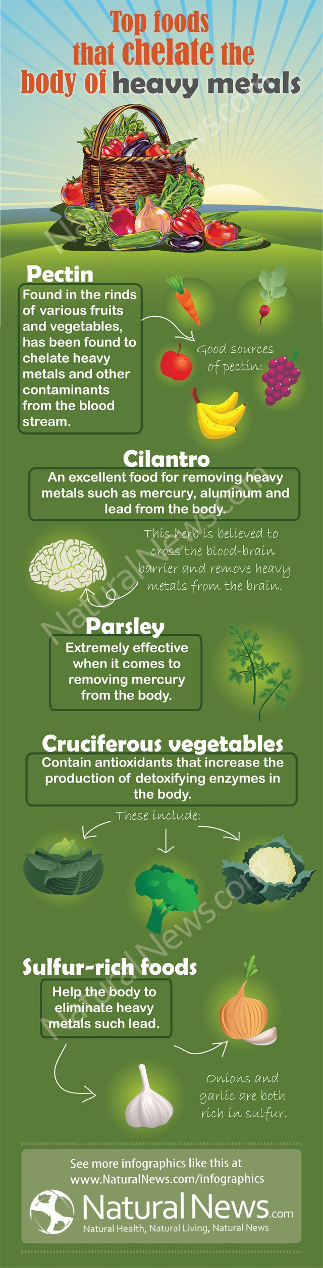 Top Foods that Chelate the Body of Heavy Metals.