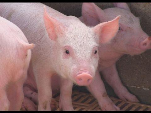 Fabricación de comedero para ganado porcino. - YouTube