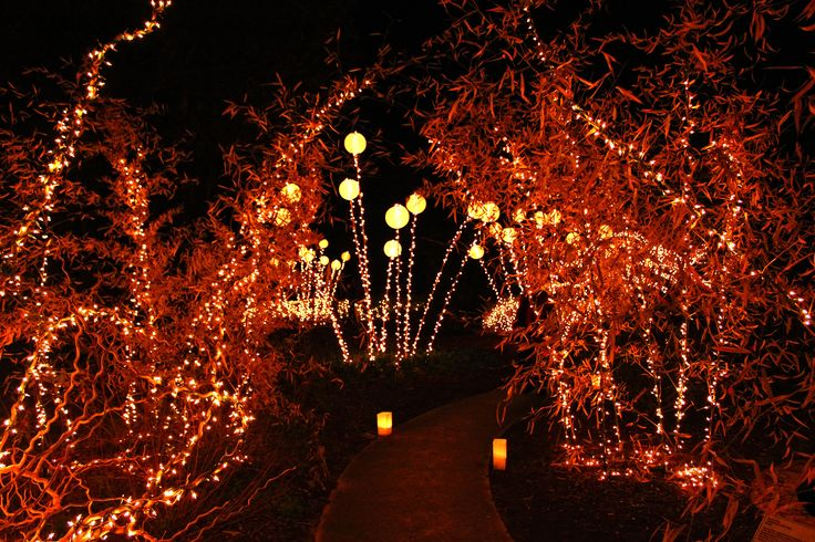19 Best Brookgreen Gardens Night Of 1000 Candles Images On Pinterest Candles Candle And