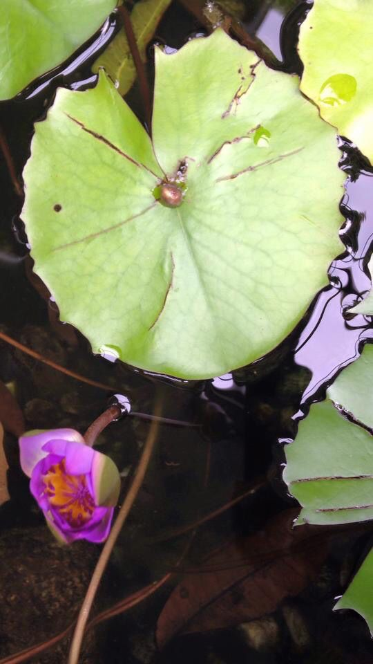 lily pad by the memo group