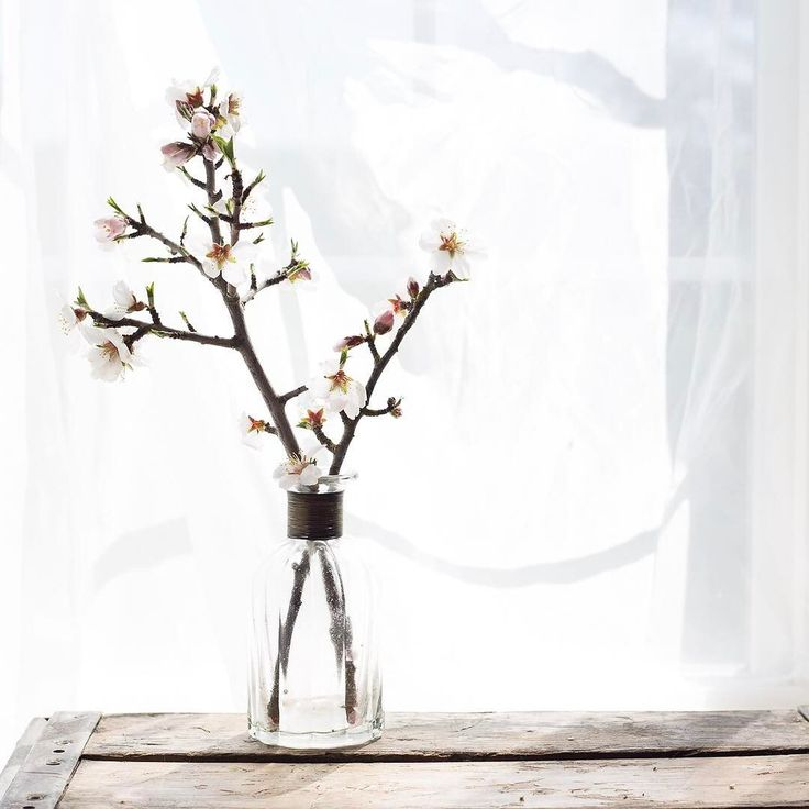 Carolyn V Photography, still life photography, still life, cherry blossoms, spring, flowers,  Character cannot be developed in ease and quiet. Only through experience of trial and suffering can the soul be strengthened ambition inspired and success achieved. Helen Keller . . .