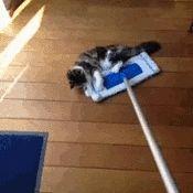 les chats serpillière les chats serpillière - Ajouter un commentaire: http://petit.chat/2016/01/03/les-chats-serpilliere/