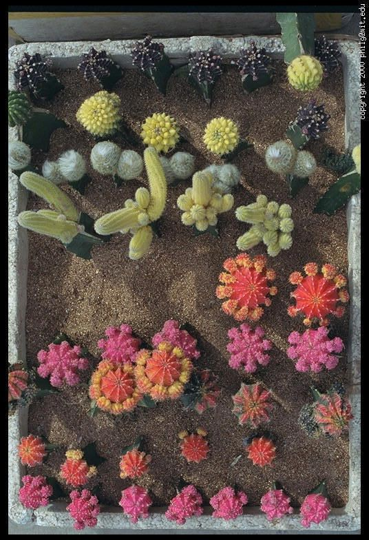 41 Best Cacti Images On Pinterest Cacti Plants And Succulent Plants - cactus garden plan