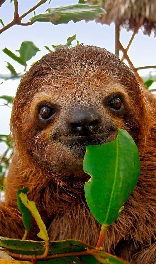On the Bucket List!! Sloth Sanctuary in Costa Rica #centralamerica