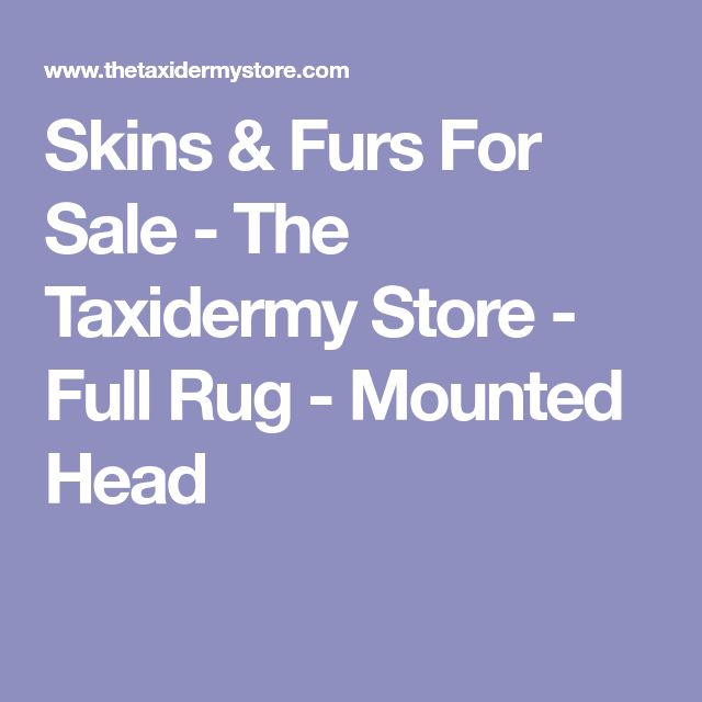 Skins & Furs For Sale - The Taxidermy Store - Full Rug - Mounted Head