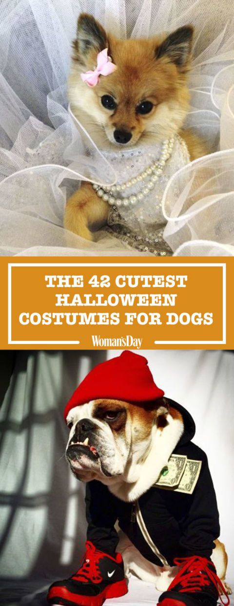 53 of the cutest halloween costumes for dogs - Fun Halloween Ideas