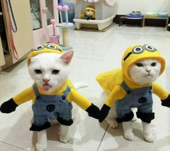 Pin By Deanna Sampson On Cats Marvelous Creatures Pet Costumes