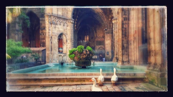 Catedral - Barcellona