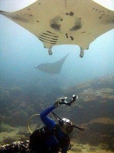 The Yap Islands: SCUBA diving paradise http://aquaviews.net/scuba-dive-destinations/land-time-forgot-yap-islands/