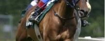 Horse Racing Tipsters | Horse Racing System  #horse #racing #jockey