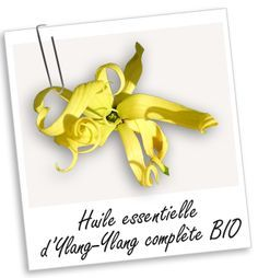 Huile essentielle d'Ylang-Ylang complète BIO - Bibliothèque - Aroma-Zone