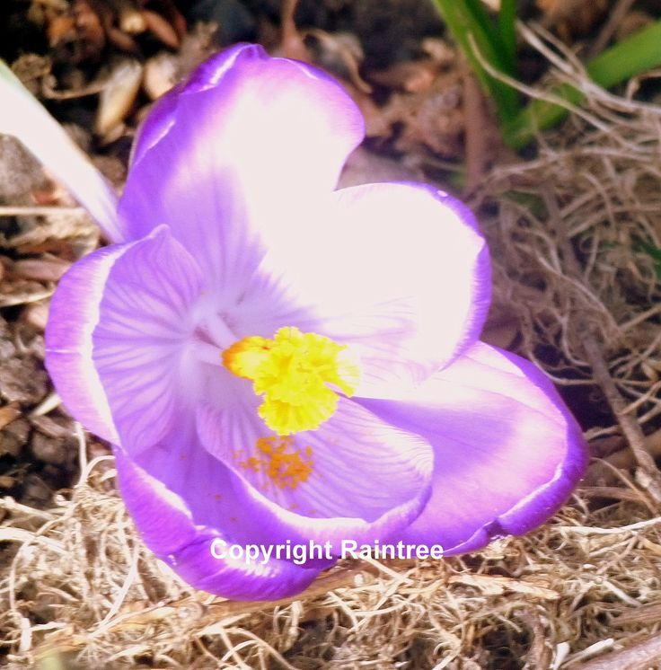 Diary Of A Wild Country Garden: Spring Flowers And Natures Rebirth-Are You Seeing Signs Of Spring?