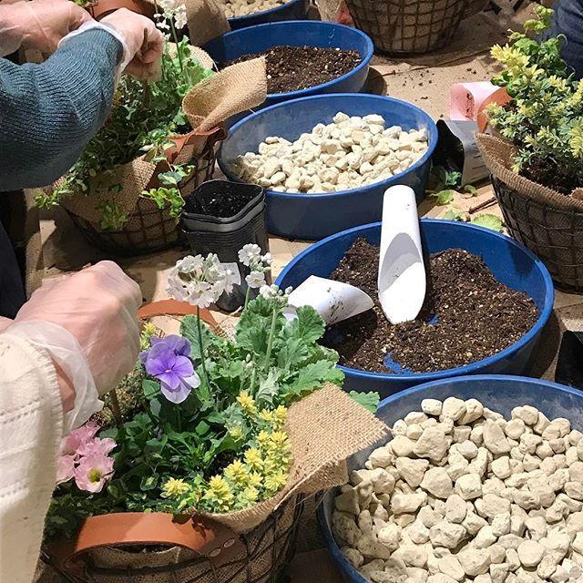 【veggieplus】さんのInstagramをピンしています。 《『寄せ植え教室』本日は今年1回目の寄せ植え教室の日でした♪(o^^o)今回は春色の草花の寄せ植えです。今週の月、火、木、金、土と後5回開催ヽ(´ー`)ノ僅かではありますが空きがございますので、ご参加できる方は是非!!ヽ(≧▽≦)ノ#大阪#天王寺#赤松種苗#グリーン#観葉植物#veggie#ベジープラス#veggieplus#多肉植物#サボテン#鉢#ハーブ#緑#水耕栽培器#園芸雑貨#エアープランツ#プリザーブドフラワー#テラリウム#鉢花#寄せ植え教室》