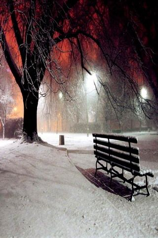 Download Free Winter Night Nature Iphone Wallpaper Mobile Wallpaper