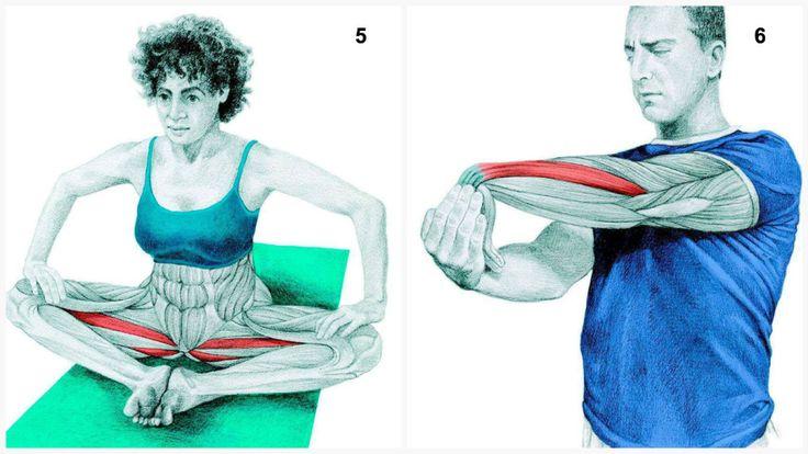ADDUCTEURS+ AVANT BRAS 5.Étirement Papillon Muscles travaillés: Adducteurs.  6.Extension des avant-bras Muscles sollicités: Avant-bras. Une fois dans cette position, appliquez une pression sur votre main opposée pour commencer l'étirement.