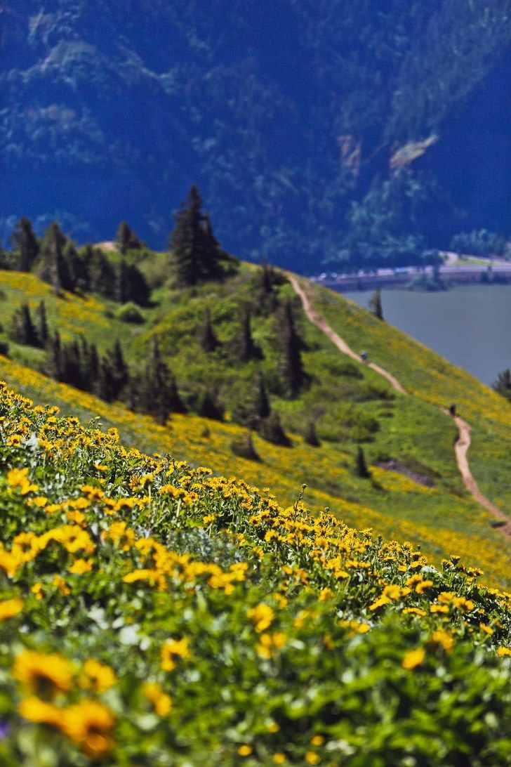 Best Wildflower Hike in the Gorge - Dog Mountain Trail, Columbia River Gorge, Washington // localadventurer.com