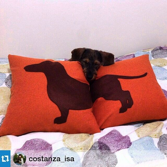 Sausage dog cushion covers. Love my doxies #ItsTimeToDream #dachshund #perrosalchicha #bassotto #dogpillow