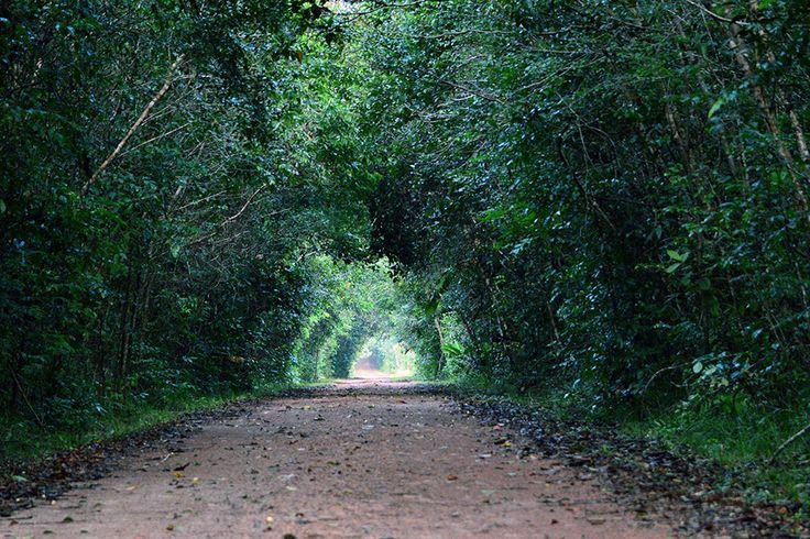 O Parque Nacional do Viruá se estende por mais de 227.000 ha e permanece sendo uma área pouca explorada pelo homem. Eleito o melhor local para observação de aves do país, possui também a maior diversidade de vertebrados do Brasil, além de trilhas de aventura de bicicleta. O acesso é feito pela BR-174 de Boa Vista até Caracaraí (são 60km) e, em seguida, por via fluvial por meio do rio Branco. #EUAMOBOAVISTA   Prefeitura de Boa Vista