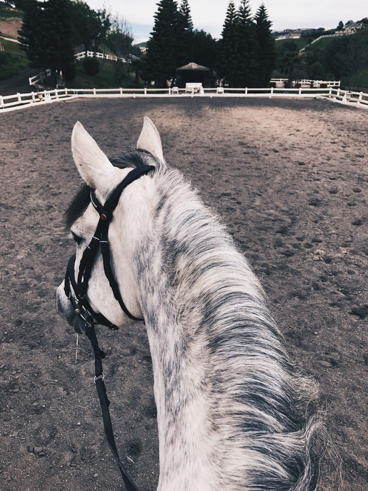 "View from the back of a horse. Pretty dapple grey. ffoxinsox: ""Ocotillo ☁️ """