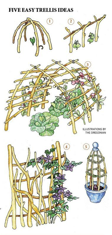 Five easy trellis ideas.