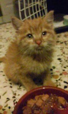 Σκέψεις: Το γατάκι που πέθανε στην αγκαλιά της Ευαγγελίας