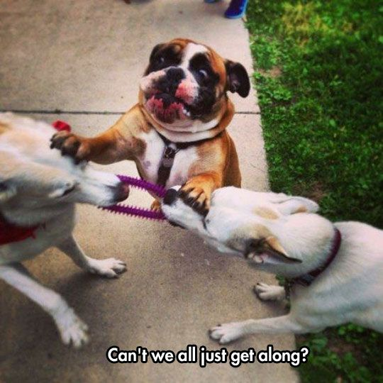 Being A Dog Mediator Is Puff! | LOL, Damn!-Spread Laughter And Awesomeness!