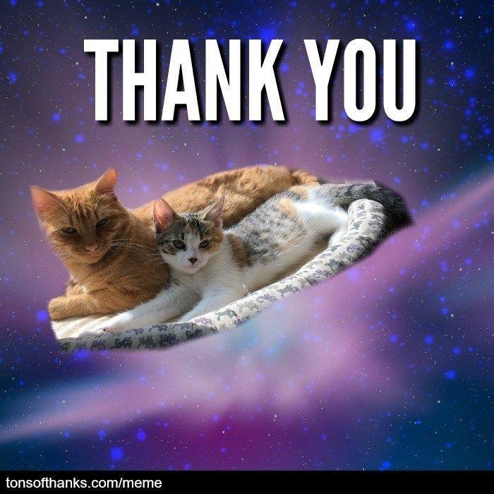 Thank You Thank You Memes Thank You Cat Meme Memes