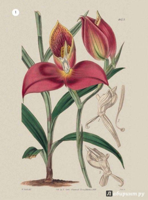 Иллюстрация 8 из 27 для Особенная раскраска. Королевский ботанический сад | Лабиринт - книги. Источник: Лабиринт