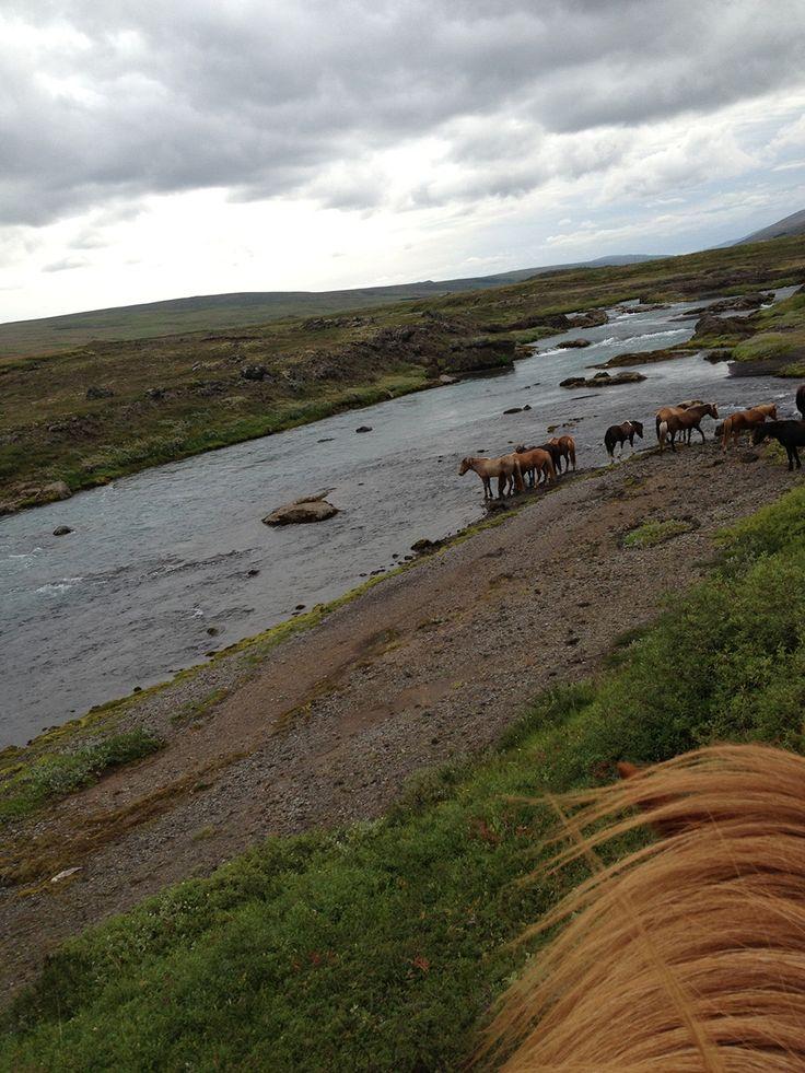 Bardardalur. Att rida islandshäst 5-7 timmar om dagen - inga problem. Inte ens med en flock om 40 löst springande hästar. Läs allt om ridresan på resorochaventyr.se.