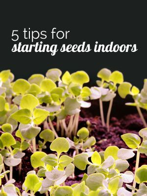 5 Tips for Starting Seeds IndoorsGardening Indoor, Gardens Ideas, Green Thumb, Households Gardens, Gardens Spr, Gardens Yards, Seeds For Vegetable Garden, Gardens Outdoor, Gardens Growing