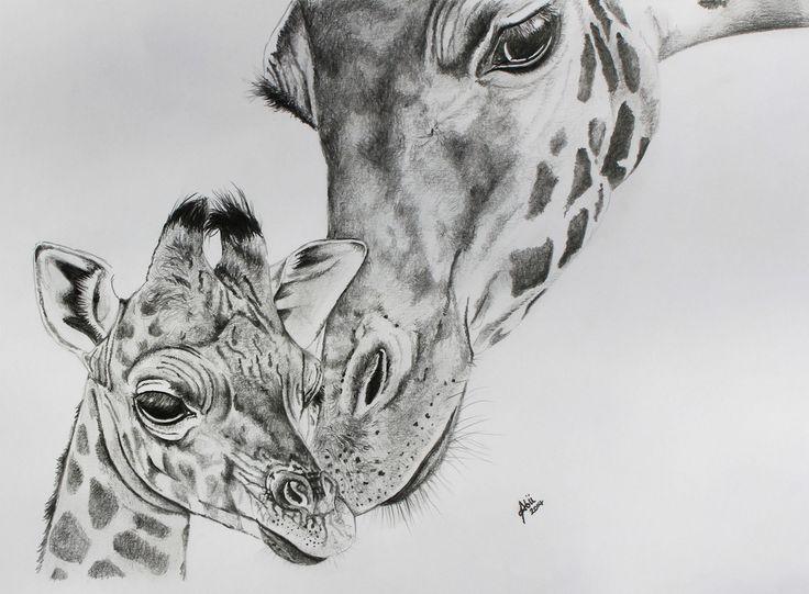 drawing giraffe and baby pencil drawing giraffe pencil drawing