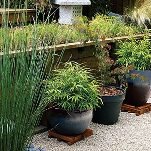 39 cool container gardens | Potted bamboo and maples | Sunset.com