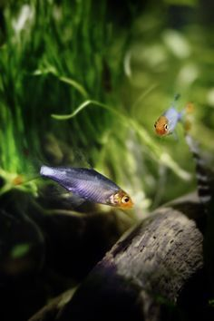 ♥ Pet Fish Stuff ♥  A beautifully planted aquarium