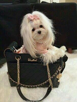 My future bestie/puppy