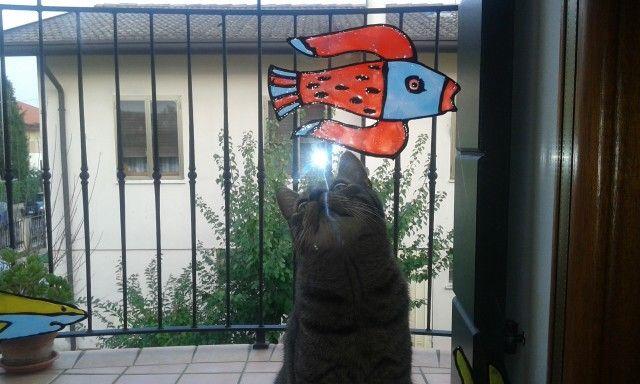 Uao..... A flying fish!