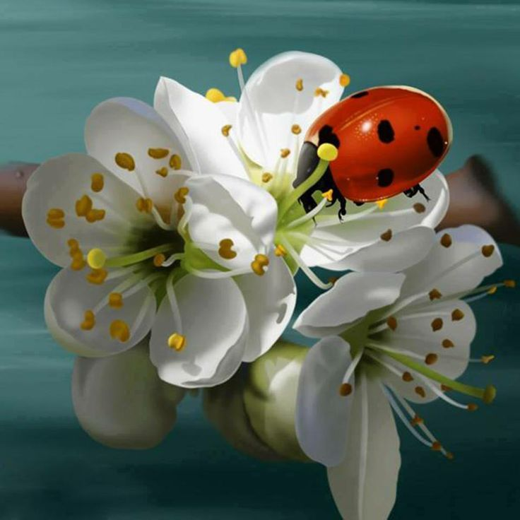 Beautifulnativeplants Ladybugs Lady Beetles Or Ladybird: 17 Beste Afbeeldingen Over Ideas: Insects Painted On Rocks