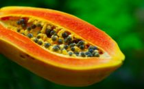 The Natural Benefits of Papaya Leaf Extract :            The Natural Benefits of Papaya Leaf Ext...