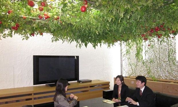 At the Tokyo headquarters of human resources firm Pasona Group, herbs grow fragrantly in the meeting rooms
