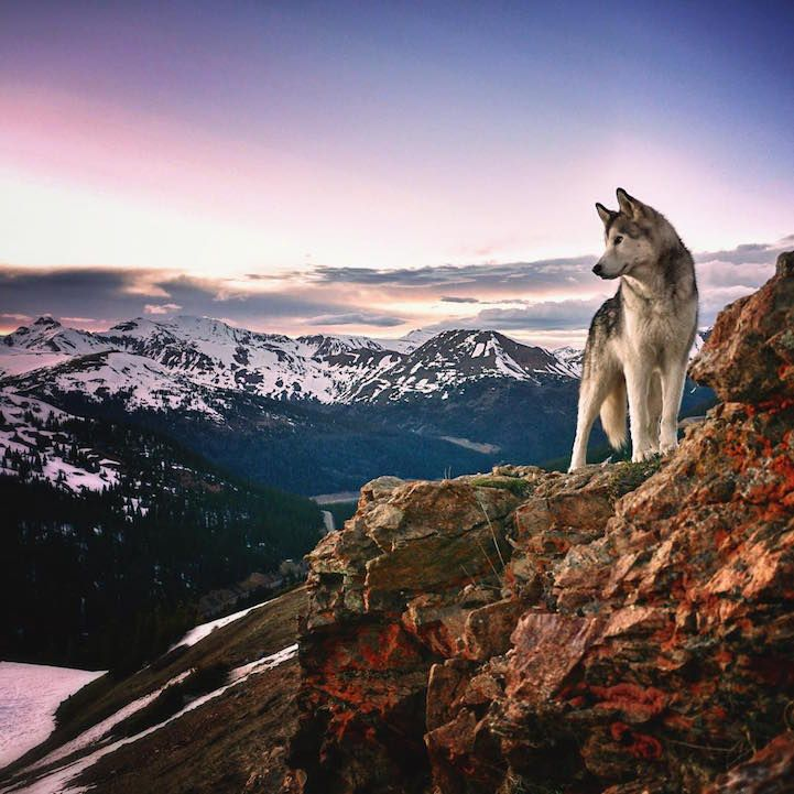Man Documents His Incredible Outdoor Adventures With Gorgeous Wolfdog