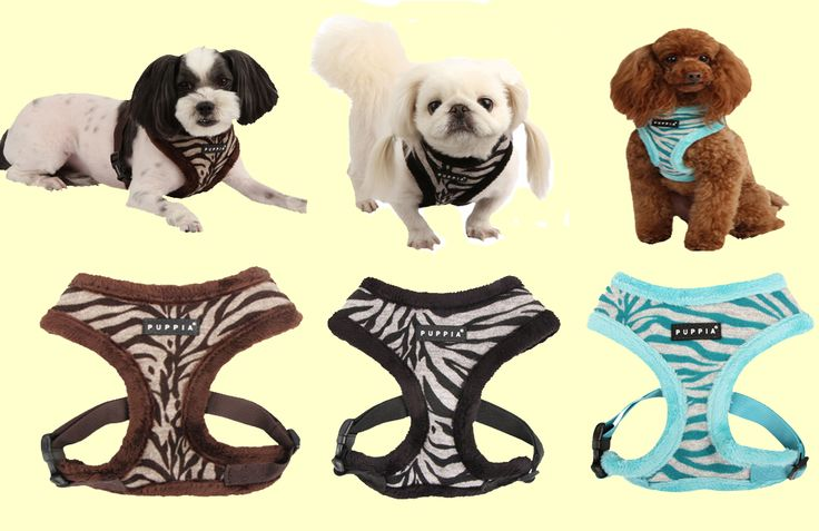 New Modern Zebra (Winter) harness from Puppia! Soft, warm and cozy.  Available in 3 colours (aqua, brown and black) and in sizes small, medium and large. Retails for only $28.00