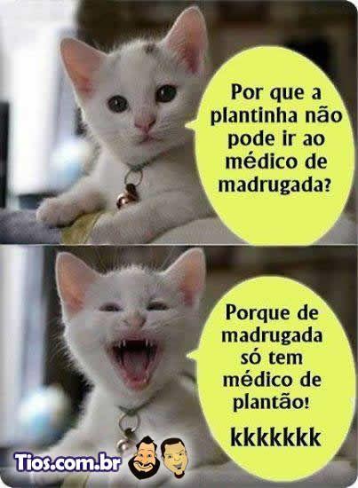 Piada do Gatinho!