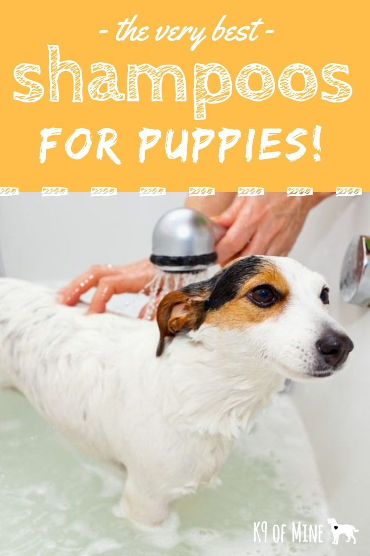 6 Best Puppy Shampoos 2020 Reviews Perfect For Pups Skin