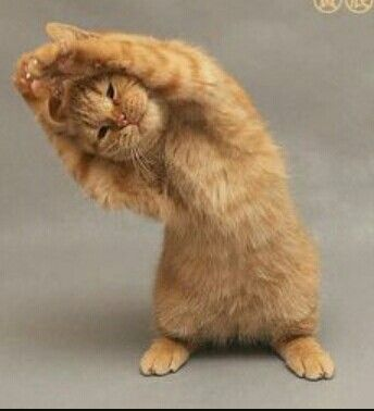 Look out its...... Yoga Cat!!!