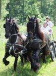 Op zondag 7 juni kunt u deelnemen aan een bijzondere tocht door het Kuinderbos. U wordt meegenomen op de menwagen getrokken door een of meerdere paarden. Leden van de plaatselijke paardensportvereniging AMV de Burcht maken met u een prachtige rondrit langs en door de mooiste stukjes van het Kuinderbos.