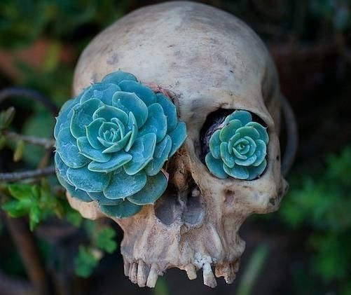with a cowskull: Gardens Ideas, Skull, Art, Plants, Dark Side, A Tattoo, Planters, Delicious, Flowers