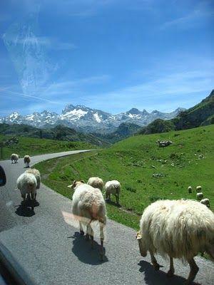 Asturias region in Spain; the Covadonga glacial lakes: Enol and La Ercina
