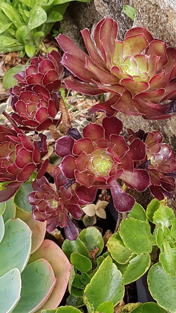 Plante Grasse Realiser Une Composition De Succulentes