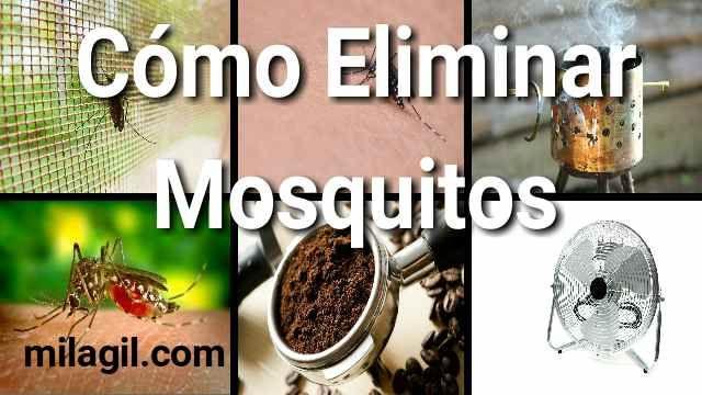 Truco Para Zancudos Con Una Botella De Plástico Veamos El Como Eliminar Los Molestos Zancudos Con El Truco De La Bot Como Eliminar Mosquitos Mosquitos Zancudos